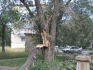отломившаяся ветвь