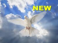 Роль Святого Духа